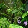 未來館珍稀植物區 東方狗脊蕨.JPG