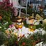 熱帶亞熱帶植物區  歡迎來到玫瑰花園.JPG