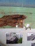 嘉義市玉山旅社:蟲蛀的痕跡