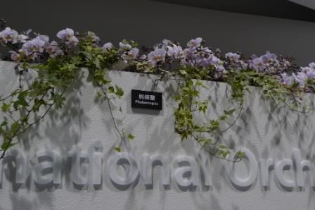 flora night 8.JPG