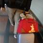 行李箱上的笑臉貓.JPG