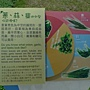 蔥蒜韭的外型.JPG