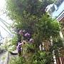 珍稀植物區生命樹.JPG