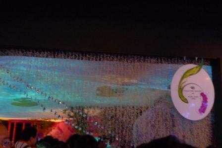 flora night 13.JPG
