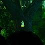 5三廳 森呼吸 樹2.JPG