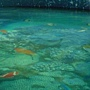天使館 魚.JPG