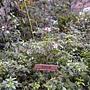 珍稀植物區烏來杜鵑.JPG