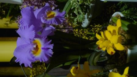 flora night 31.JPG