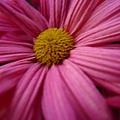 flower19.JPG