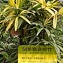 珍稀植物區斑葉觀音棕竹.JPG