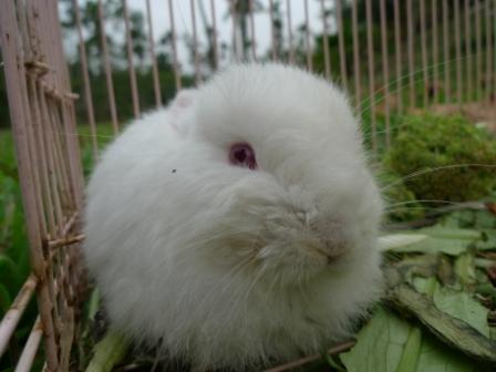 11小兔 - 複製.JPG