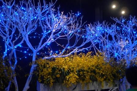flora night 12.JPG