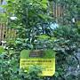 珍稀植物區 牛樟.JPG