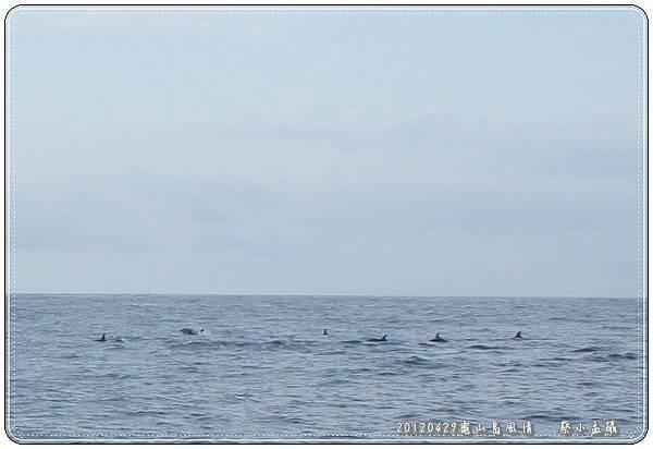 海豚蹤跡-1