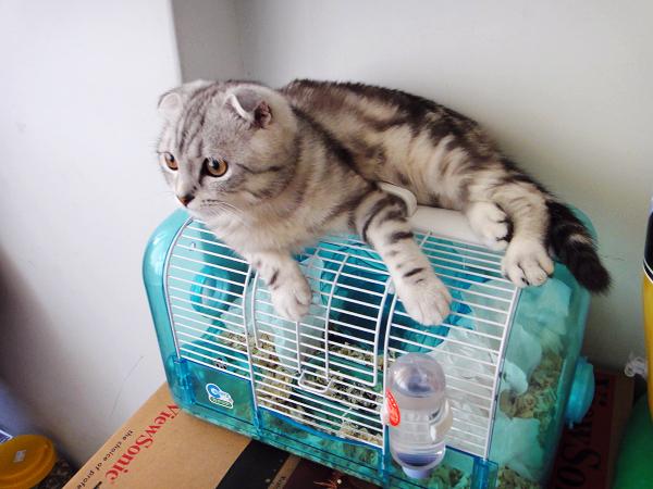 老鼠好可憐 XD