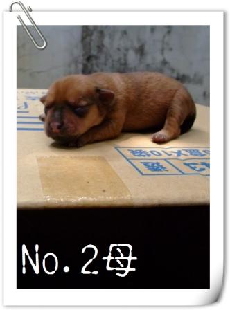 No.2母.jpg