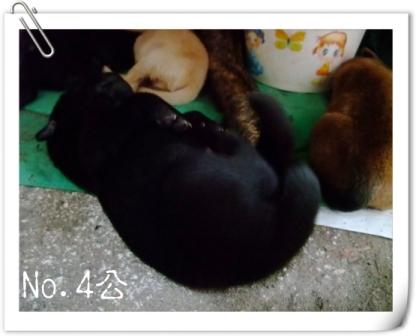 No.4公.JPG
