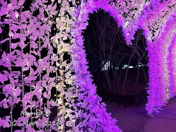 京畿道晨靜樹木園五色星光庭園展20192.jpg