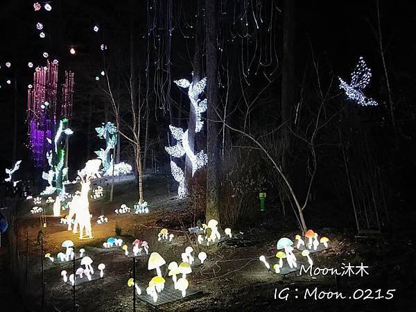 京畿道晨靜樹木園五色星光庭園展201918.jpg