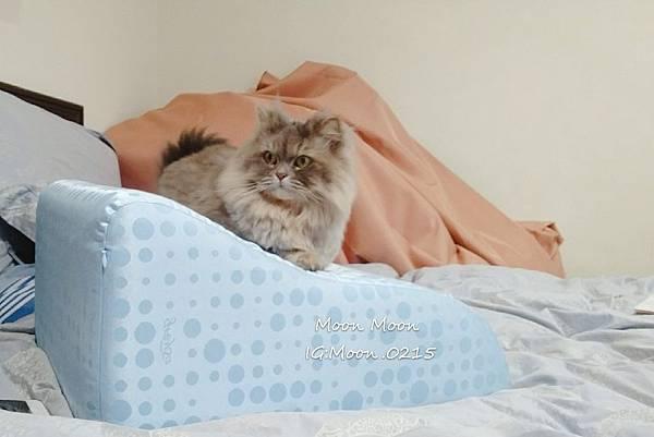 GreySa 格蕾莎 抬腿枕_190209_0014.jpg