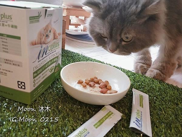 in plus 益生菌 貓評價 PA-5051 貓用益生菌+牛磺酸 海藻粉 艾斯克 寵物 食品_190501_0006.jpg