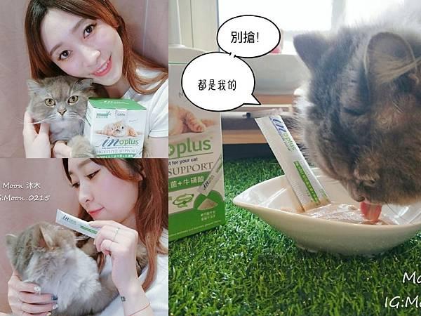 in plus 益生菌 貓評價 PA-5051 貓用益生菌+牛磺酸 海藻粉 艾斯克 寵物 食品_190501_0015.jpg