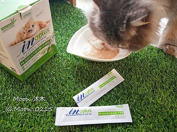 in plus 益生菌 貓評價 PA-5051 貓用益生菌+牛磺酸 海藻粉 艾斯克 寵物 食品_190501_0019.jpg