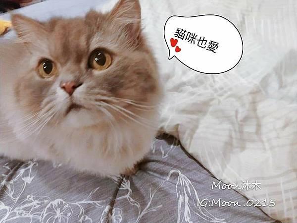 獨立筒床墊推薦 織眠家族 床墊發表會 Famttini 手工床墊 乳膠床墊 羊毛墊 隔音棉 2028_190711_0_3.jpg