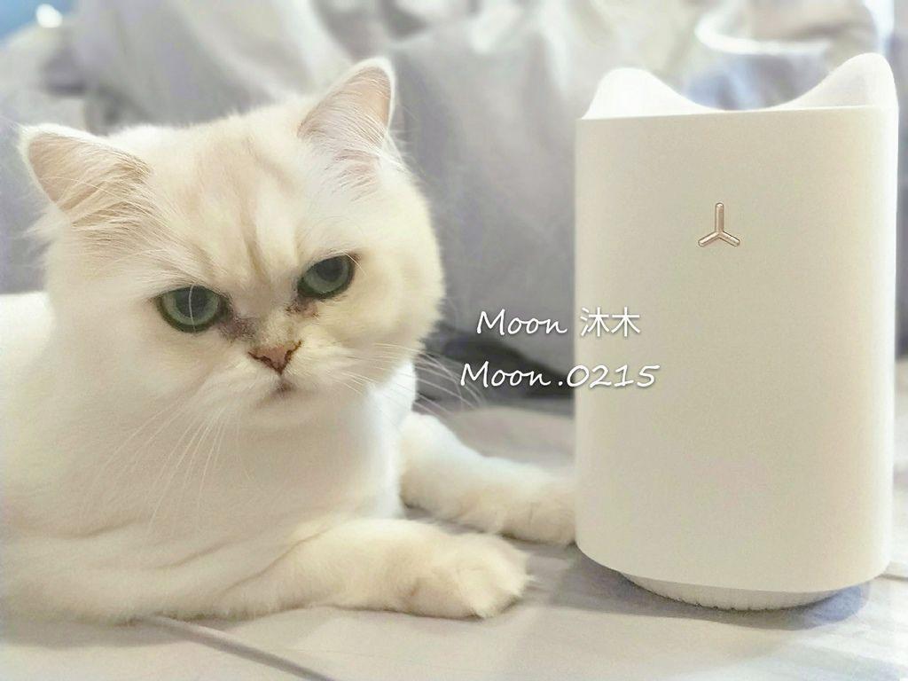 貓樂園 捕蚊燈 _190803_0010