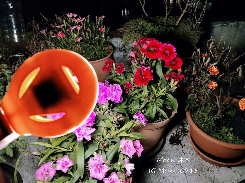 Magipea 美極品 自拍神圈3.0 背景版 自拍棒 拍照道具_191203_0015.jpg