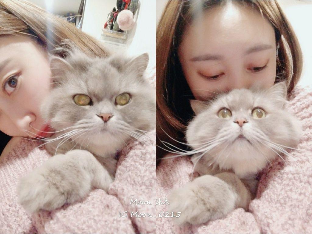 2020貓咪飼料推薦 無穀飼料推薦 貝斯比無穀貓 非基因飼料推薦 那個牌子貓飼料好 貓飼料_24.jpg