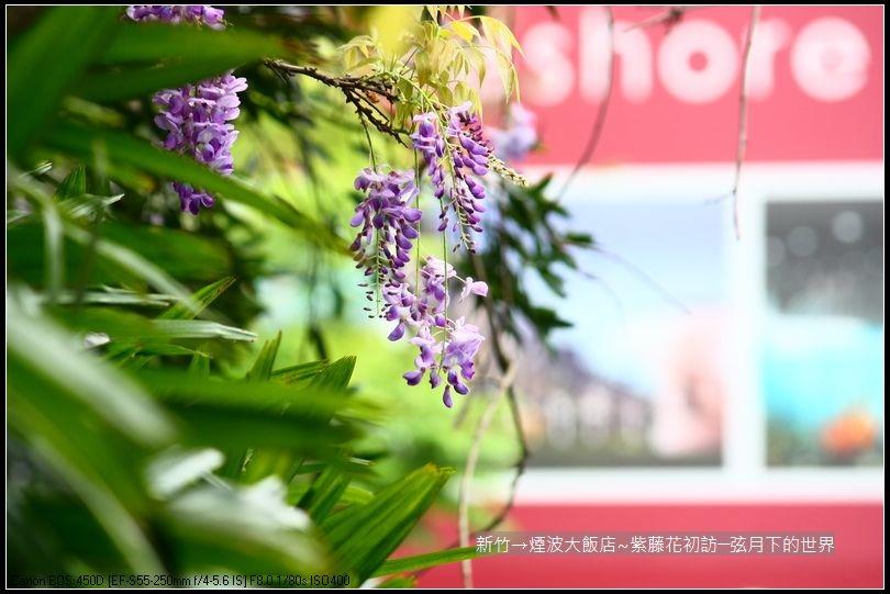 新竹煙波大飯店~紫藤花初訪_09.jpg