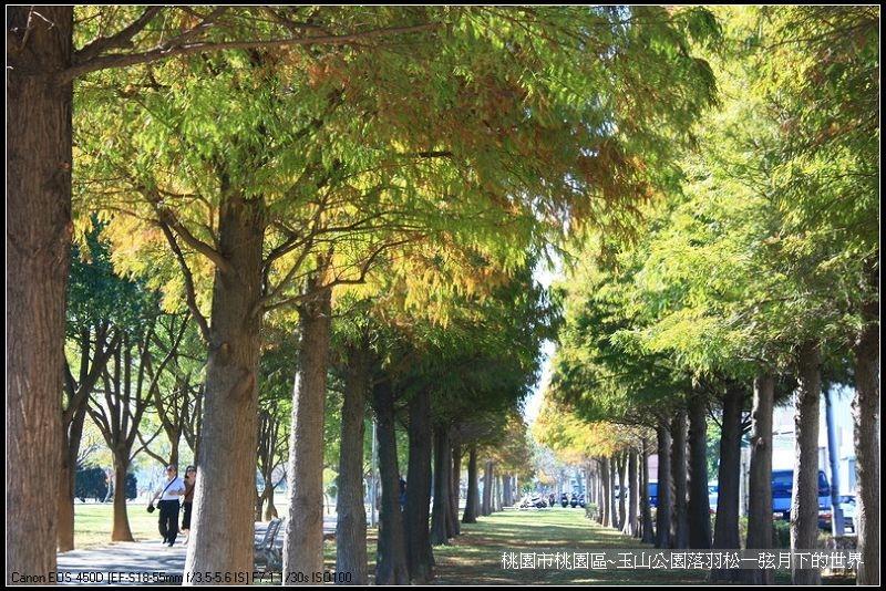 玉山公園落羽松_04.jpg