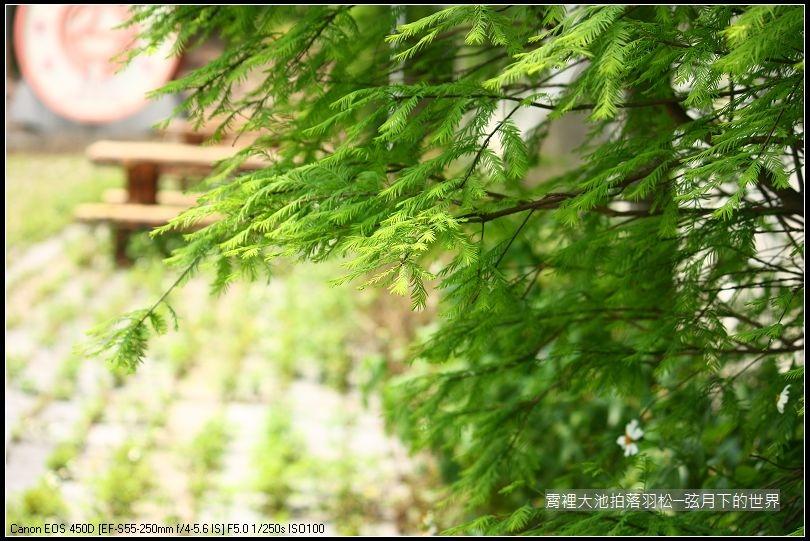 綠意盎然的霄裡大池 (7)