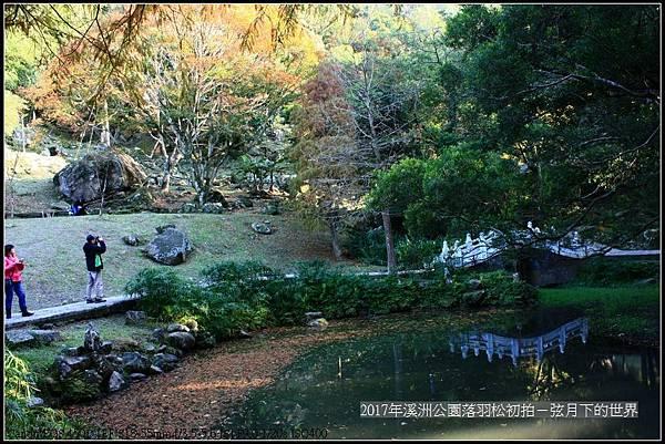 2017年溪洲公園落羽松初拍 (24).jpg
