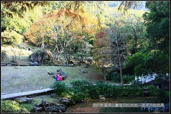 2017年溪洲公園落羽松初拍 (25).jpg
