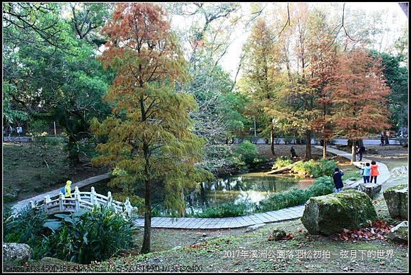 2017年溪洲公園落羽松初拍 (32).jpg