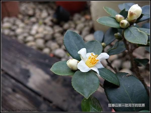 恆春山茶  (5).jpg