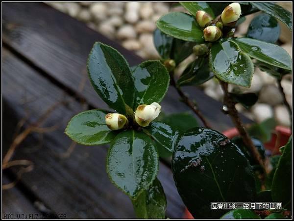 恆春山茶  (1).jpg