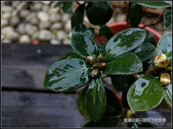 恆春山茶  (2).jpg