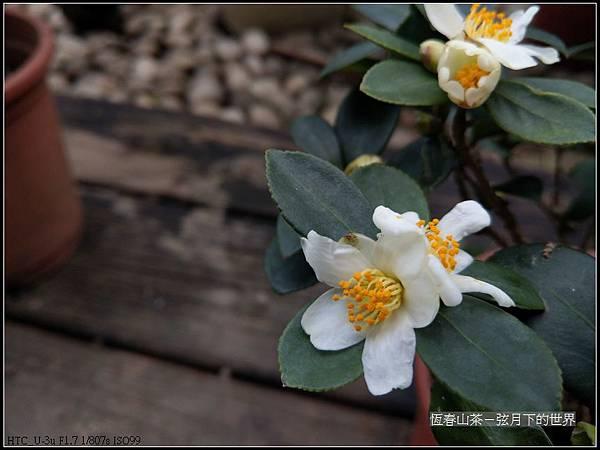 恆春山茶  (9).jpg