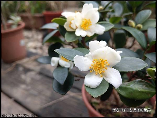恆春山茶  (16).jpg
