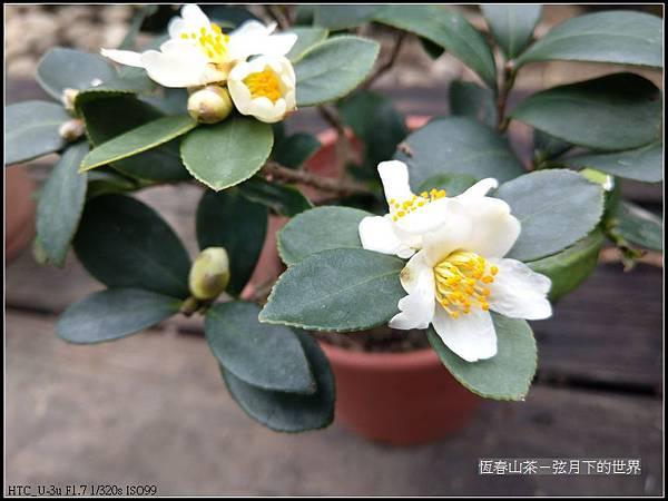 恆春山茶  (13).jpg