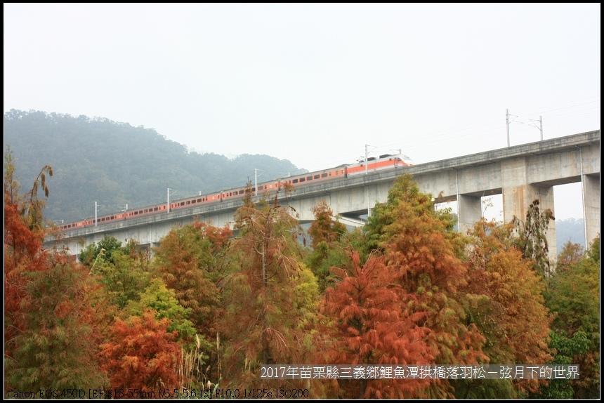 2018年三義鯉魚潭拱橋落羽松 (37).jpg