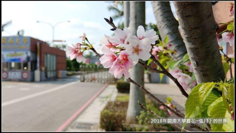 2018年4月9日開南大學賞花 (1).jpg