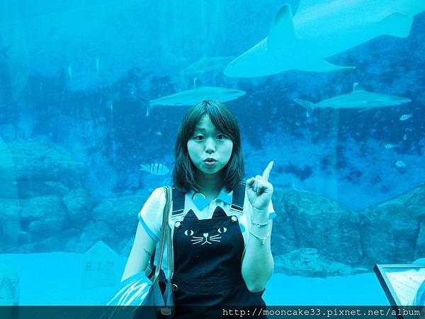喔!有鯊魚