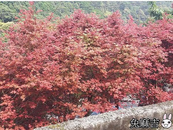 台北奧萬大 (1).jpg