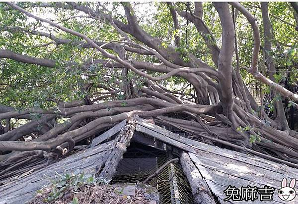 樹屋 (15).jpg