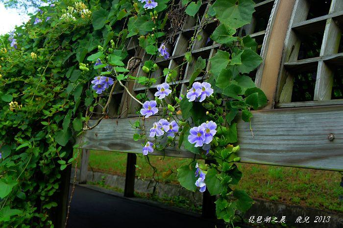 2013-08琵琶湖之晨10