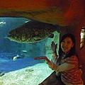這是很大的石斑魚